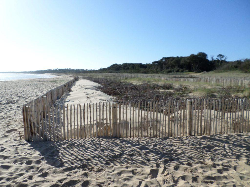 La protection douce du littoral par la pose de ganivelles en bois